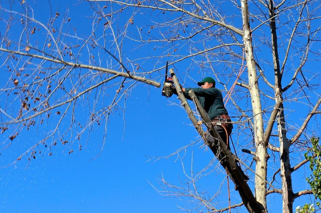 Contact Us-West Chase FL Tree Trimming and Stump Grinding Services-We Offer Tree Trimming Services, Tree Removal, Tree Pruning, Tree Cutting, Residential and Commercial Tree Trimming Services, Storm Damage, Emergency Tree Removal, Land Clearing, Tree Companies, Tree Care Service, Stump Grinding, and we're the Best Tree Trimming Company Near You Guaranteed!