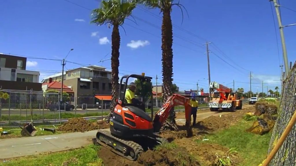 Palm Tree Removal-West Chase FL Tree Trimming and Stump Grinding Services-We Offer Tree Trimming Services, Tree Removal, Tree Pruning, Tree Cutting, Residential and Commercial Tree Trimming Services, Storm Damage, Emergency Tree Removal, Land Clearing, Tree Companies, Tree Care Service, Stump Grinding, and we're the Best Tree Trimming Company Near You Guaranteed!