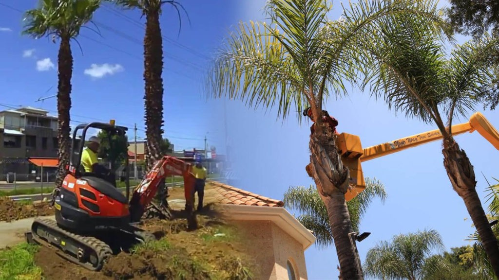 Palm tree trimming & palm tree removal-West Chase FL Tree Trimming and Stump Grinding Services-We Offer Tree Trimming Services, Tree Removal, Tree Pruning, Tree Cutting, Residential and Commercial Tree Trimming Services, Storm Damage, Emergency Tree Removal, Land Clearing, Tree Companies, Tree Care Service, Stump Grinding, and we're the Best Tree Trimming Company Near You Guaranteed!