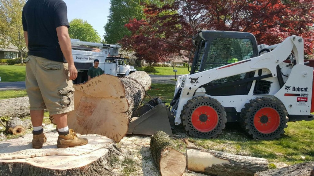 Services-West Chase FL Tree Trimming and Stump Grinding Services-We Offer Tree Trimming Services, Tree Removal, Tree Pruning, Tree Cutting, Residential and Commercial Tree Trimming Services, Storm Damage, Emergency Tree Removal, Land Clearing, Tree Companies, Tree Care Service, Stump Grinding, and we're the Best Tree Trimming Company Near You Guaranteed!