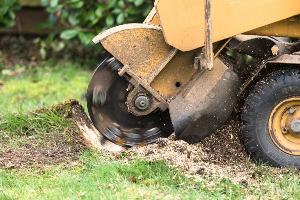 Stump Grinding-West Chase FL Tree Trimming and Stump Grinding Services-We Offer Tree Trimming Services, Tree Removal, Tree Pruning, Tree Cutting, Residential and Commercial Tree Trimming Services, Storm Damage, Emergency Tree Removal, Land Clearing, Tree Companies, Tree Care Service, Stump Grinding, and we're the Best Tree Trimming Company Near You Guaranteed!