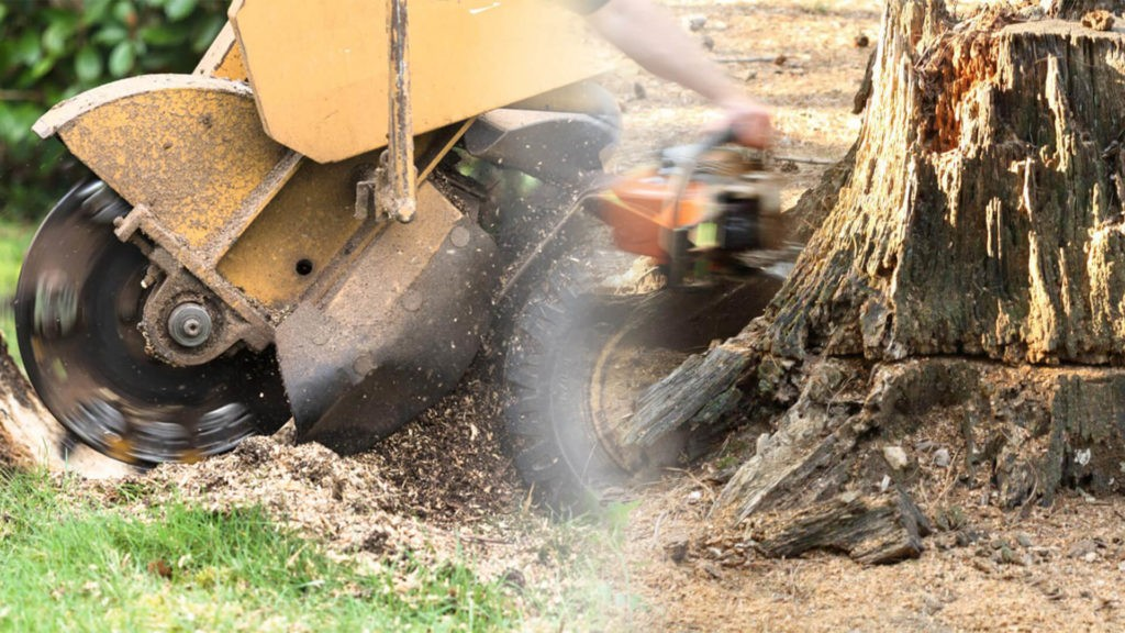 Stump grinding & removal-West Chase FL Tree Trimming and Stump Grinding Services-We Offer Tree Trimming Services, Tree Removal, Tree Pruning, Tree Cutting, Residential and Commercial Tree Trimming Services, Storm Damage, Emergency Tree Removal, Land Clearing, Tree Companies, Tree Care Service, Stump Grinding, and we're the Best Tree Trimming Company Near You Guaranteed!