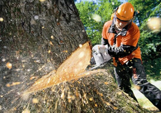 Tree Cutting-West Chase FL Tree Trimming and Stump Grinding Services-We Offer Tree Trimming Services, Tree Removal, Tree Pruning, Tree Cutting, Residential and Commercial Tree Trimming Services, Storm Damage, Emergency Tree Removal, Land Clearing, Tree Companies, Tree Care Service, Stump Grinding, and we're the Best Tree Trimming Company Near You Guaranteed!