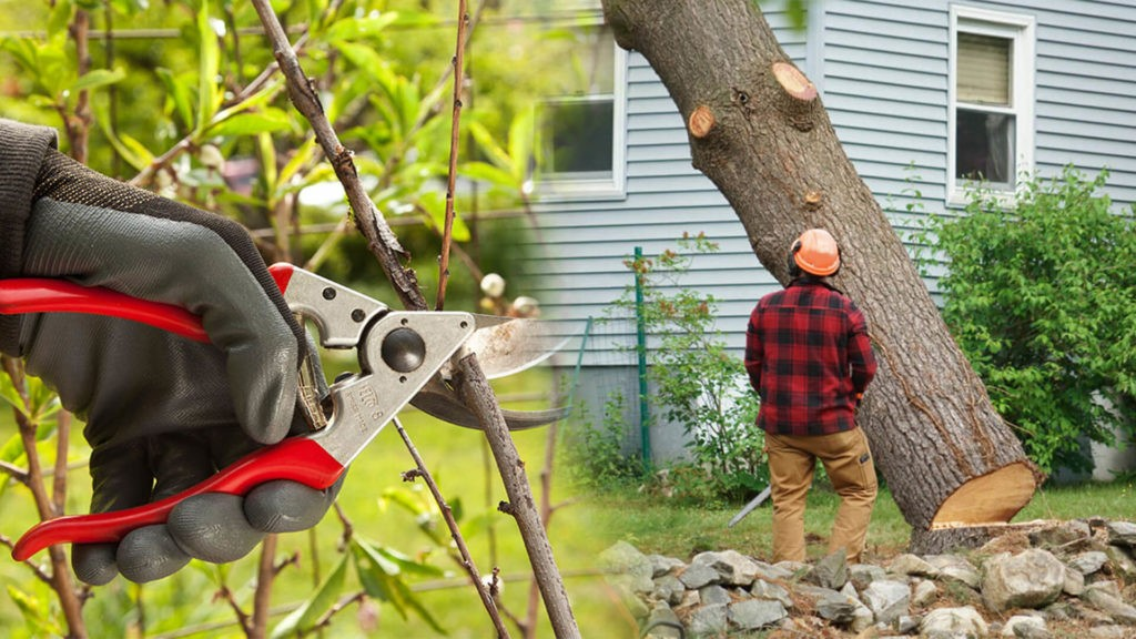 Tree pruning & tree removal-West Chase FL Tree Trimming and Stump Grinding Services-We Offer Tree Trimming Services, Tree Removal, Tree Pruning, Tree Cutting, Residential and Commercial Tree Trimming Services, Storm Damage, Emergency Tree Removal, Land Clearing, Tree Companies, Tree Care Service, Stump Grinding, and we're the Best Tree Trimming Company Near You Guaranteed!